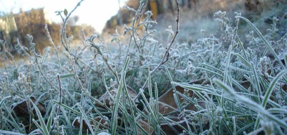 В конце августа в Украине ожидаются заморозки — прогноз