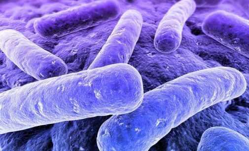 Ученые нашли микробиом в человеческом мозге