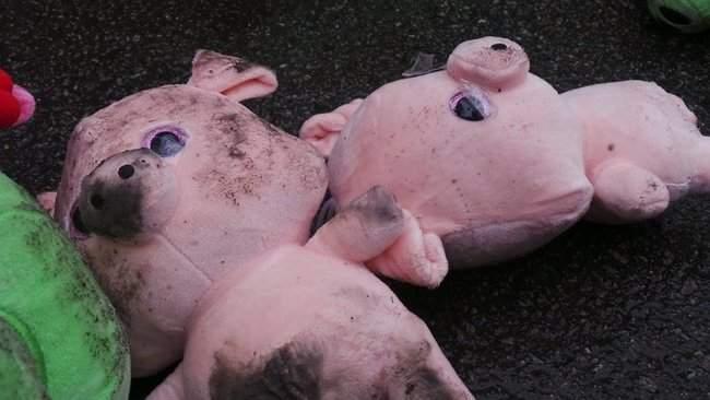 Участники акции Свинарчуків Порошенка – за ґрати! забросали силовиков у Администрации Президента игрушечными свиньями 16