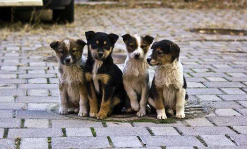 Турбота за безпритульними тваринами