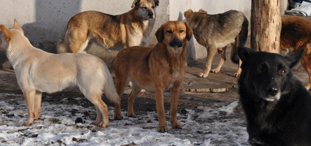 Кожній собаці – будку!