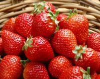 Из-за коронавируса COVID-19 может пострадать ягодный бизнес