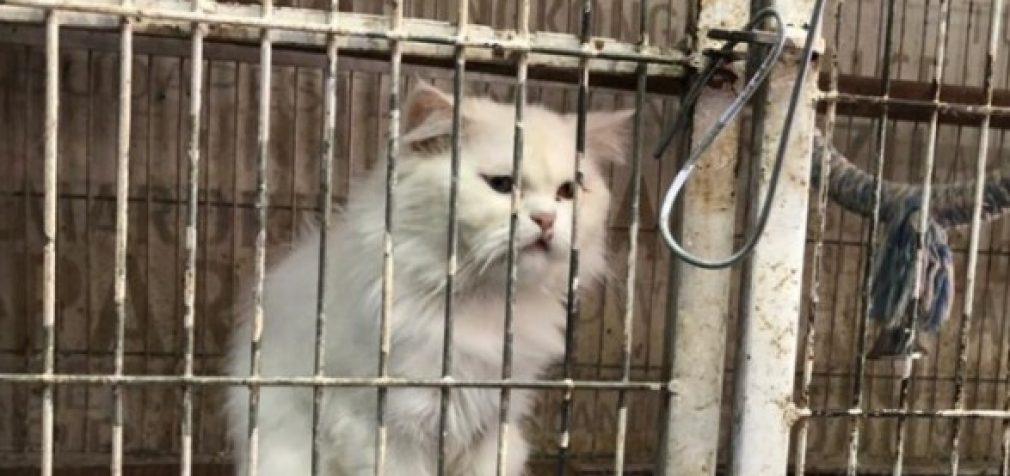 Карантин в Пакистане: животных оставили умирать в зоомагазинах
