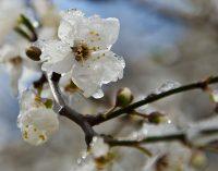 Сады Италии, Польши и Украины пострадали от заморозков