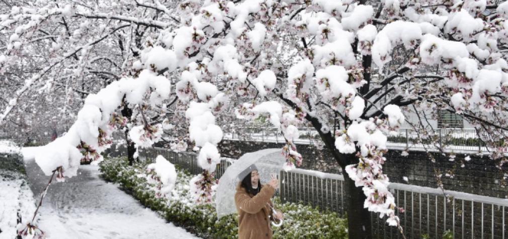 Пандемия снега в Японии, Испании, РФ и Беларуси: зима решила вернуться