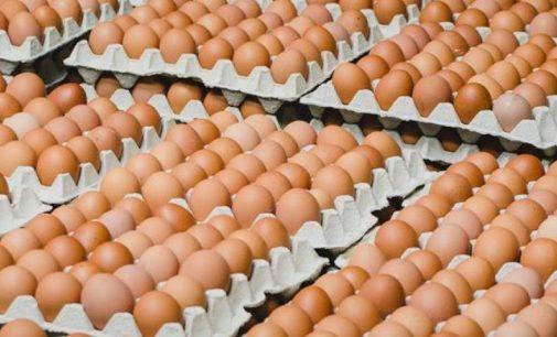 В супермаркетах «АТБ» в ближайшее время подорожают яйца