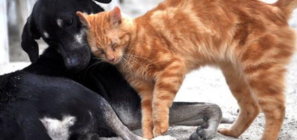 В одном из китайских городов запретили есть котов и собак