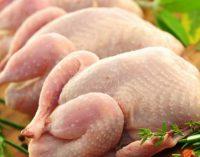 Украине должно хватить курятины: АМКУ пригрозил «Нашей рябе»