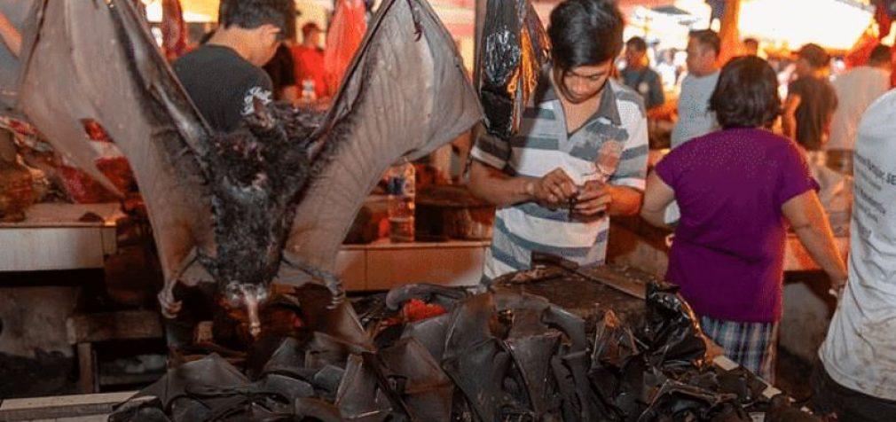 В Китае открылись рынки с живым товаром, в продаже опять летучие мыши