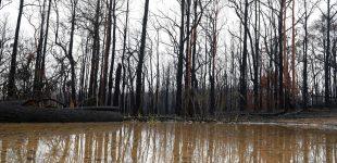 Дожди в Украине прекратили засуху, – Укргидрометцентр