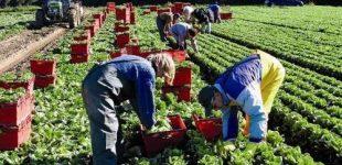 Польша отменила для рабочих из Украины 14-дневный карантин