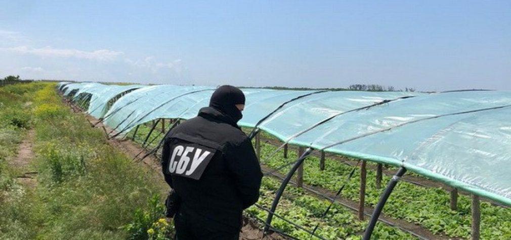 СБУ нашла в Херсонской области незаконные табачные плантации