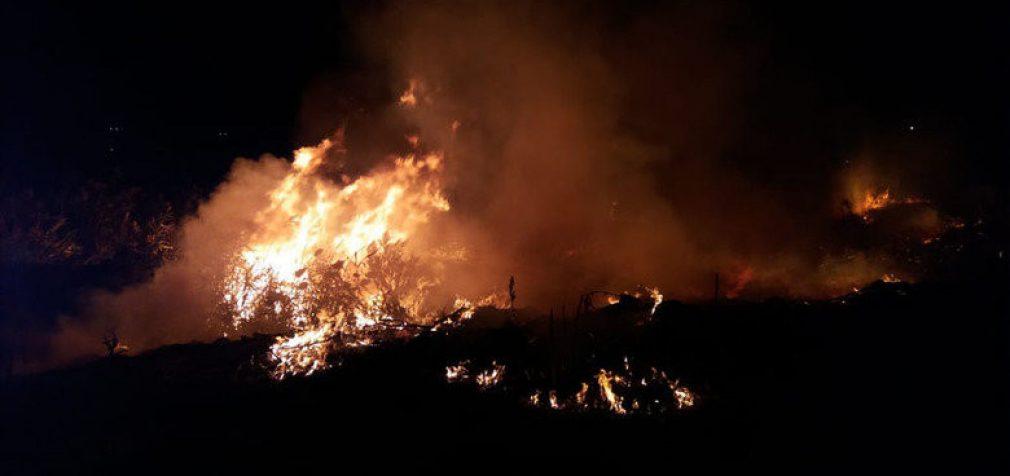Почему на Днепропетровщине горят экосистемы: спасатели дали ответ