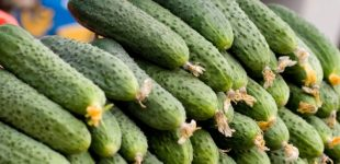 В Украине тепличные комбинаты впервые наращивают экспорт
