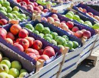 В Украине начнут дорожать качественные яблоки