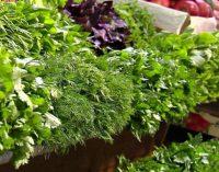 Украина наращивает импорт зелени и микрозелени – высокий спрос