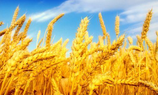 Украина своё зерно продала, теперь завозит импортное