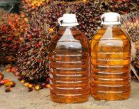 В Украине подготовлен проект закона о запрете пальмового масла
