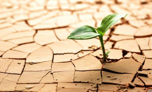 В Украине урожаи могут быть низкими из-за рекордной засухи летом