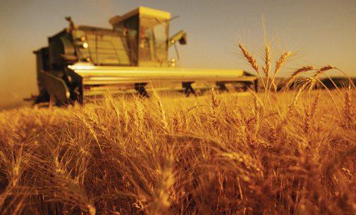 Эксперт рассказал, какой урожай будет в этом году