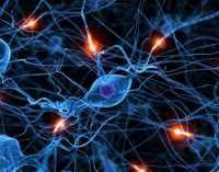 Ученые заявили о существовании отдельного микроба в мозге человека
