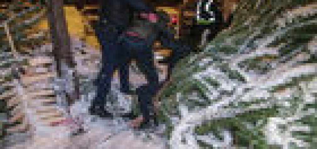 Похищение елки в Киеве закончилось дракой с применением ножей, топора и газа. ВИДЕО+ФОТО
